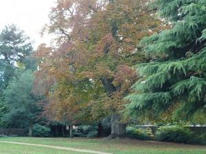 Abingdon-gardens-trees