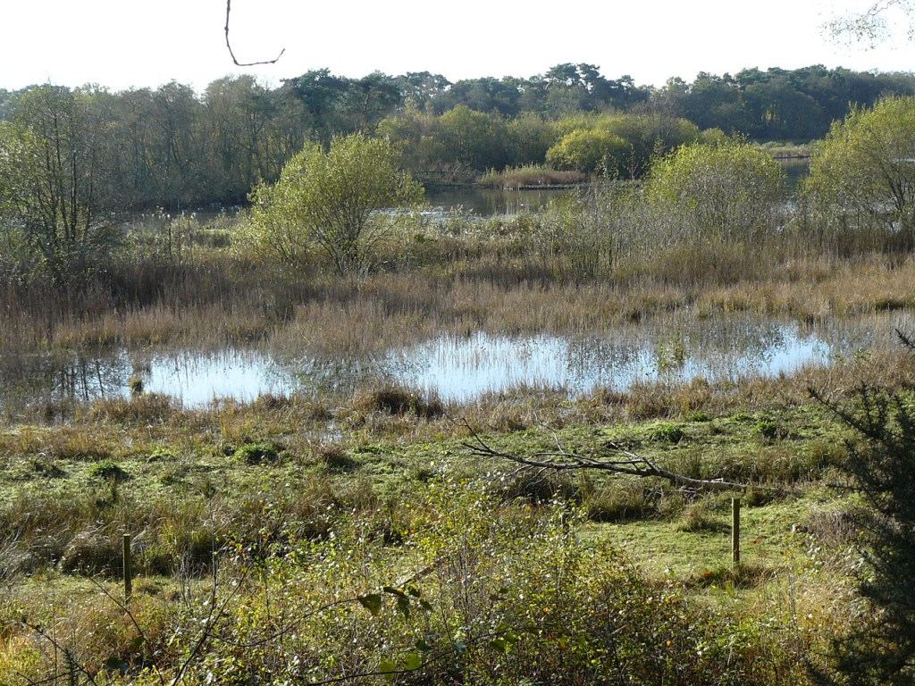 Marshland at Fleet Pond