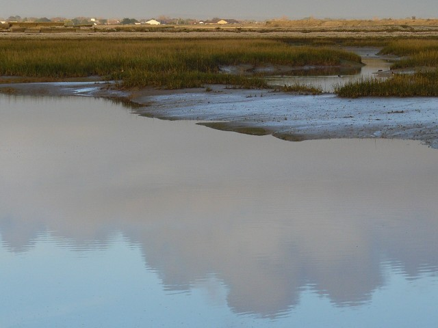 Evening stillness at Pagham harbour nature reserve
