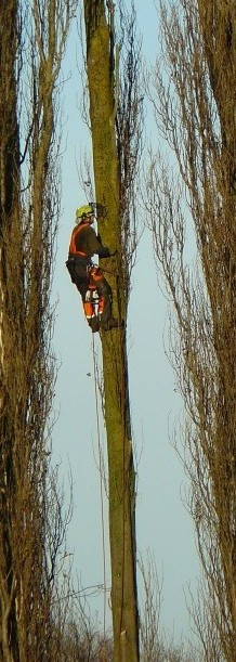 Tree surgeon, Abbey Meadows, Abingdon, Nov 2014