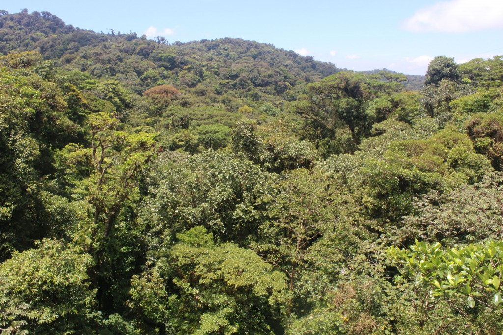 Monteverde forest canopy, Costa Rica