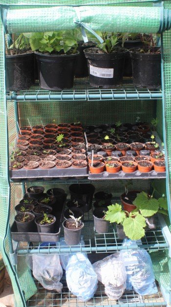 No room in the greenhouse