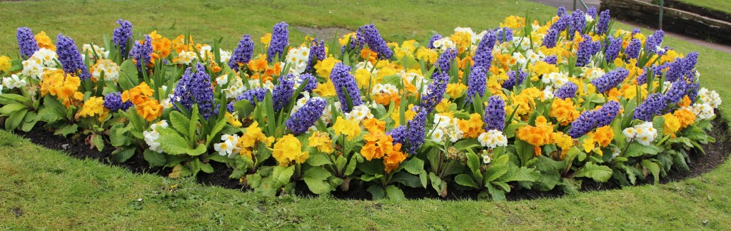 Ilkley flower display
