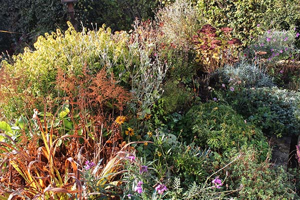 Don't tidy up autumn herbaceous borders