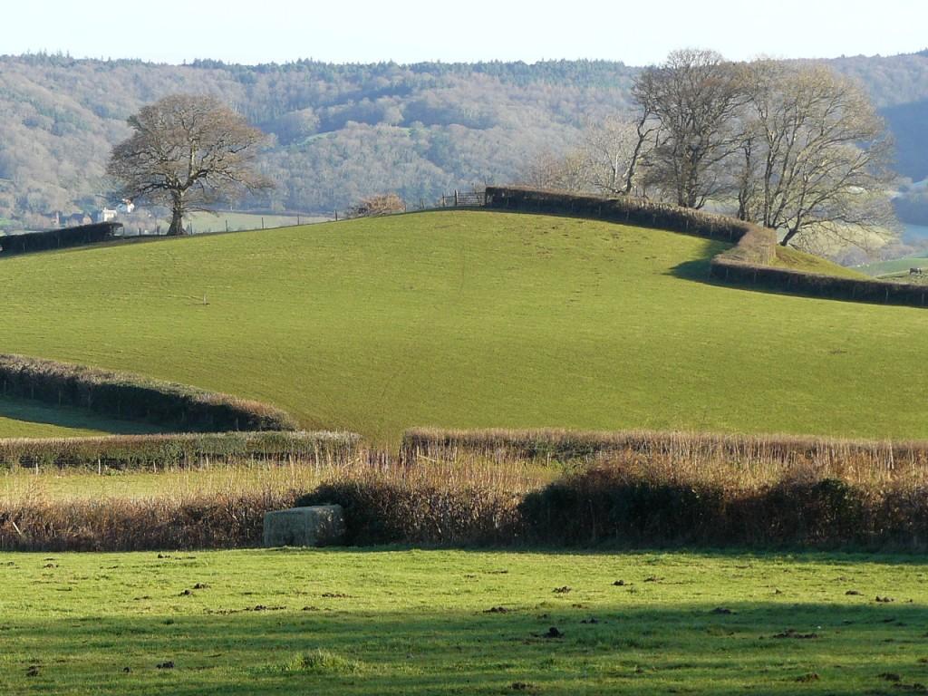 The green fields of Exmoor