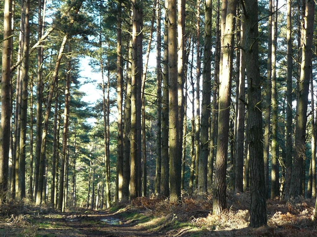 The woodlands of Exmoor