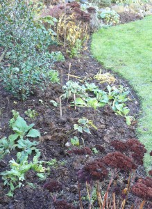 Preparation of herbaceous borders for winter