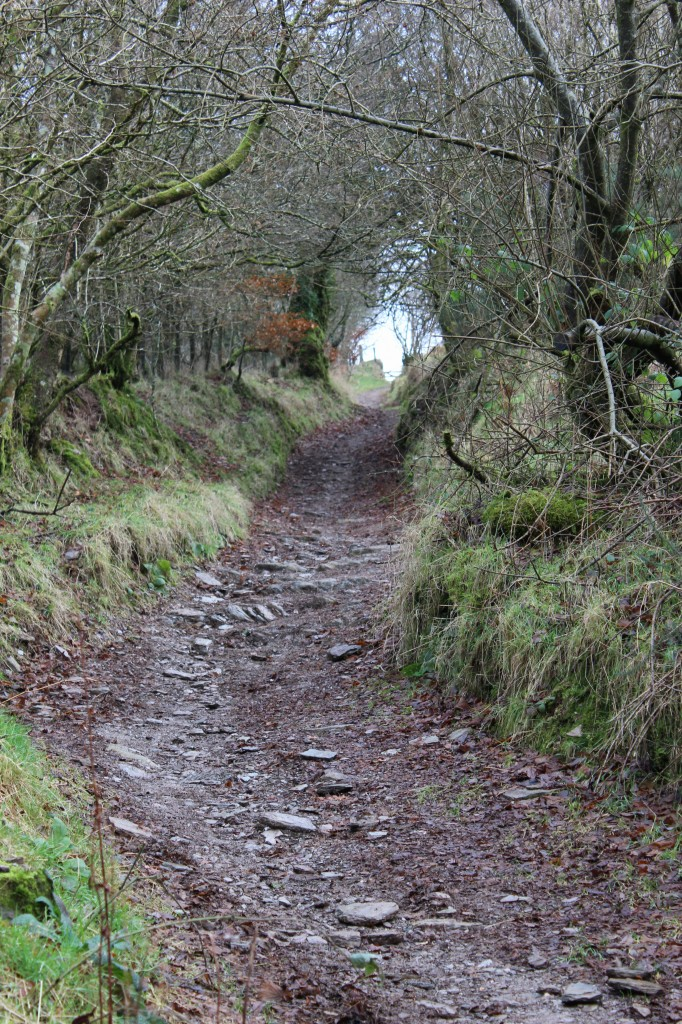 Exford walk, heading uphill again