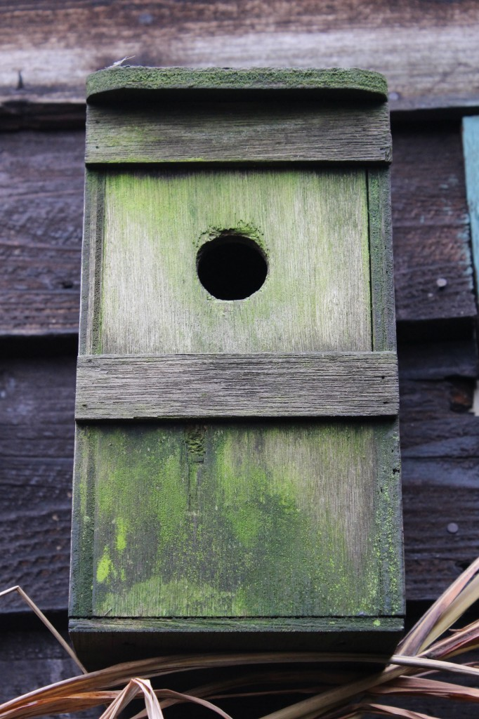 Well-worn blue tit nest box