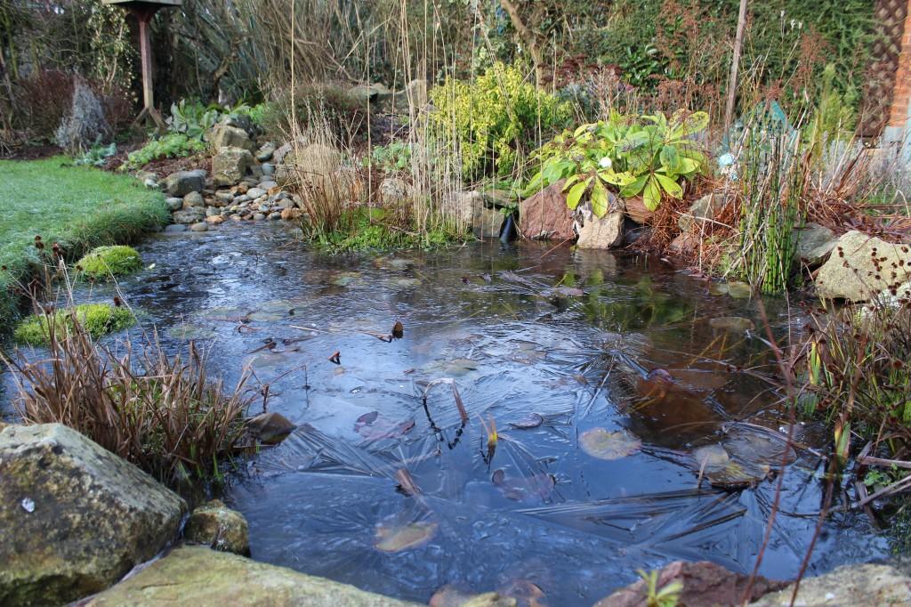 #spring NO - frozen pond