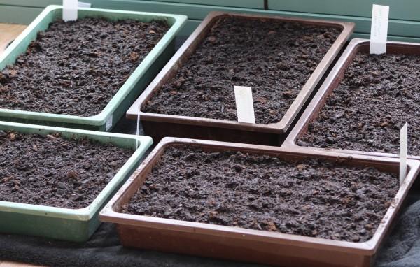 Seed trays on the kitchen floor