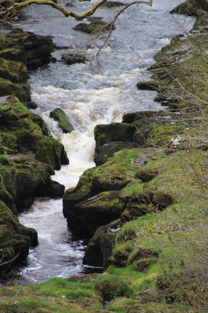 The frothing waters of the Strid at Bolton Abbey