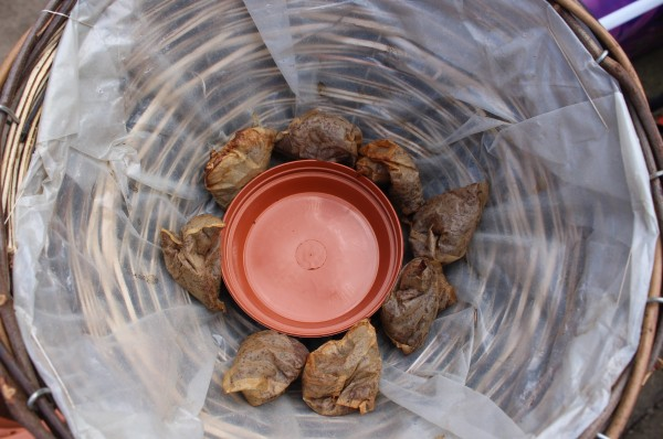A small saucer and used tea bags, placed at the bottom of the basket to help retain water