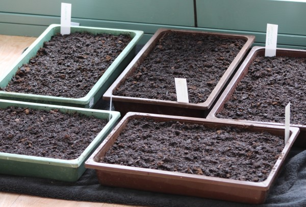Waiting for germination - seed trays