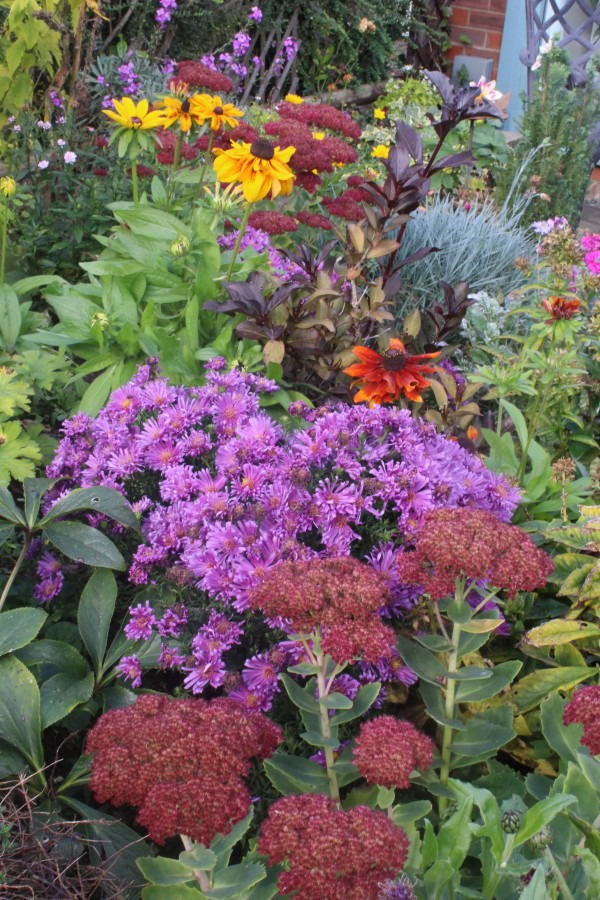 The rich jewel tones of the autumn borders