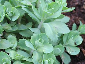 Pile the mulch around your herbaceous plants, up to 2 inches think and up to the bases