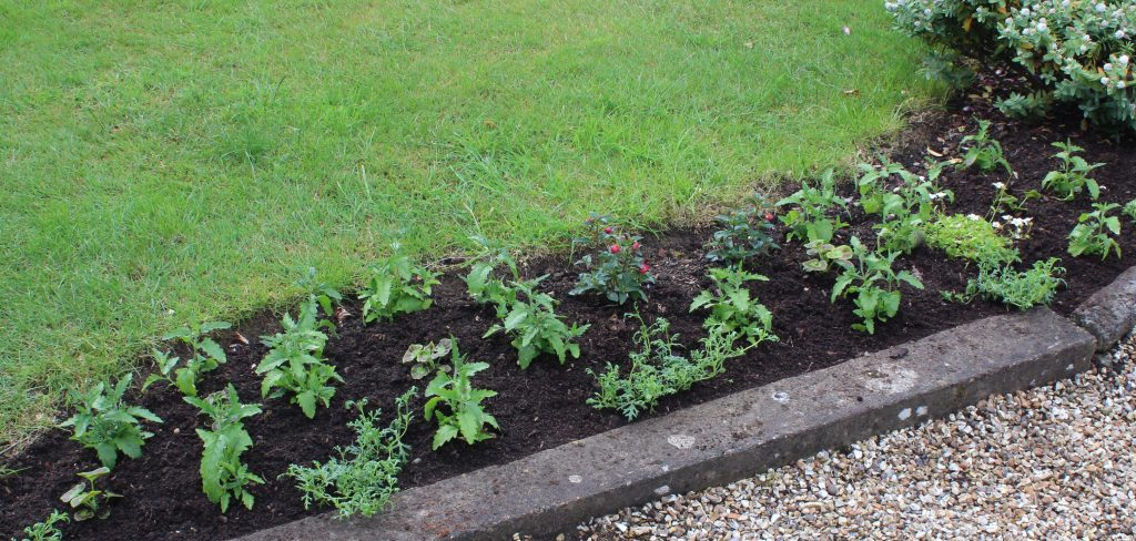 New summer bedding: annual verbenas and geraniums