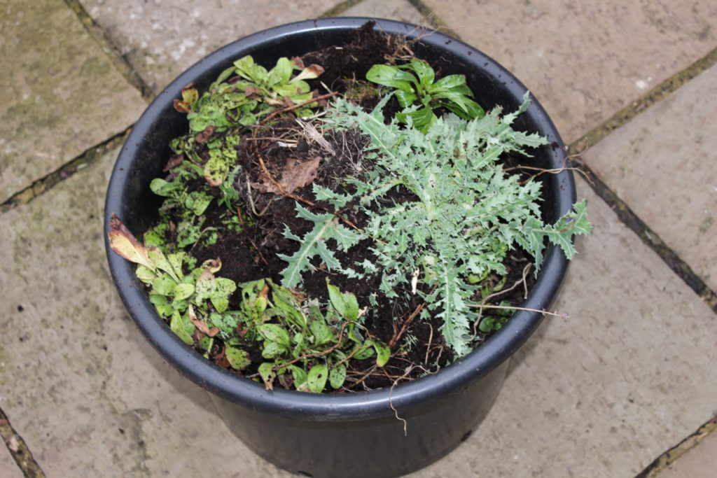 Bucket-of-weeds