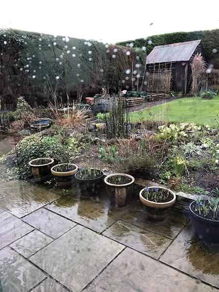 Wet-garden
