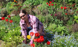 Garden for your physical and mental health