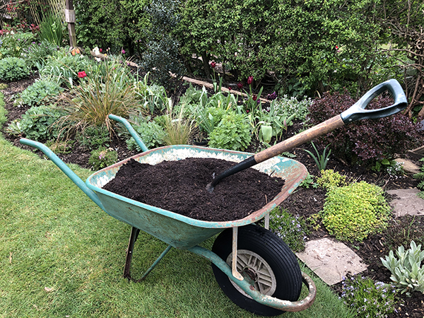 A wheelbarrow full of mulch